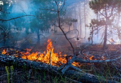 Phönix: Dé module voor natuurbrandbestrijding